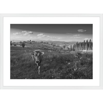 Cow in the Meadow, Framed Paper Print Frame Color: White, Size: 21