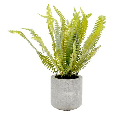 Faux Fern in Cement Planter
