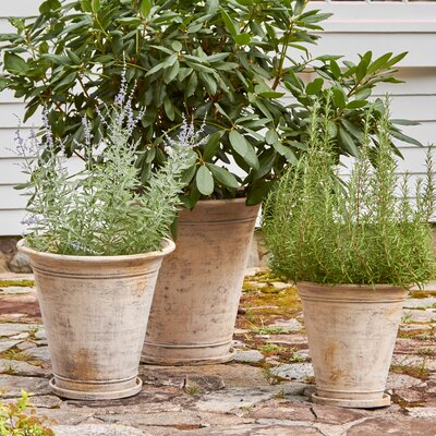 Birch Lane Corfu Terracotta Pot Planter