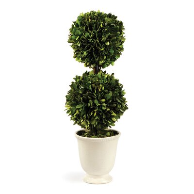 Perserved Greens Double Ball Topiary in Pot
