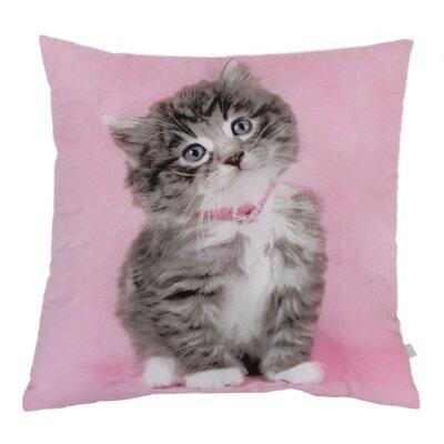 Rachael Hale So Sweet Kitty Cushion at Sears.com