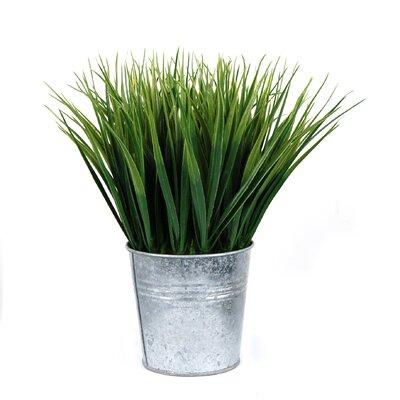 Sword Foliage Grass in Pot