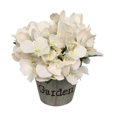 Hydrangeas Floral Arrangement in Beige Pot Flower Color: White