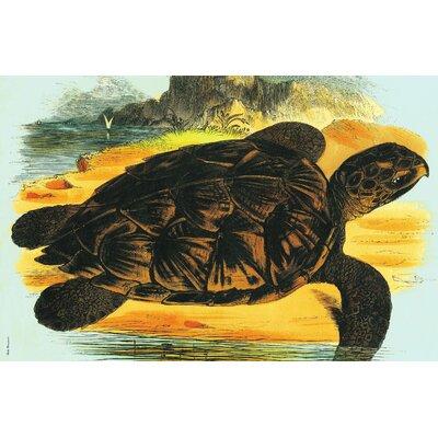 Sea Turtle Placemat Sea Turtle