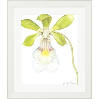Orchid Beauty I by Jennifer Goldberger Framed Painting Print 10611