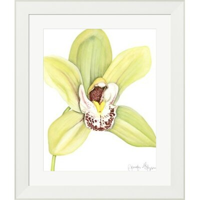 Orchid Beauty II by Jennifer Goldberger Framed Painting Print 10612