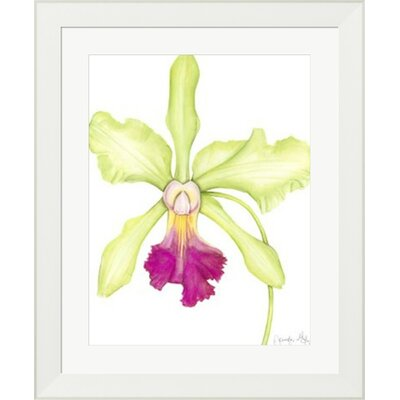 Orchid Beauty III by Jennifer Goldberger Framed Painting Print 10613