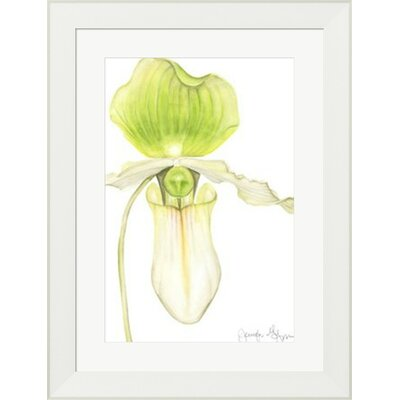 Orchid Beauty IV by Jennifer Goldberger Framed Painting Print 10614