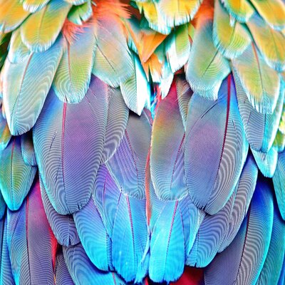 'Parrot Feathers' Graphic Art on Canvas Size: 12