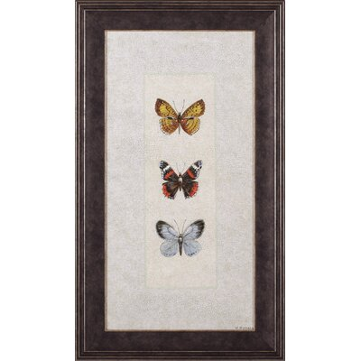 Butterfly Trio II Wendy Russell Framed Graphic Art G75163