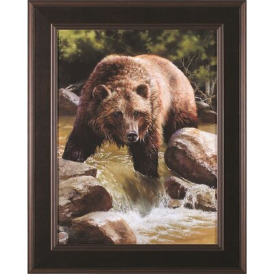 Grizzly At Roaring Creek By Bonnie Marris Framed Photographic Print