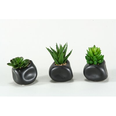 3 Piece Mixed Echeveria, Aloe & Succulents in Ceramic Planter Set