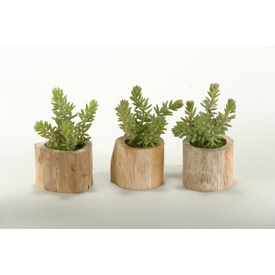 Flocked Burro Tails in Wooden Planter