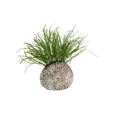 Pearl Grass Splattered Mocha Sanddollar Floral Arrangements in Planter