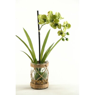 Vanda Orchids with Foliage and Seagrass Netting in Glass Vase