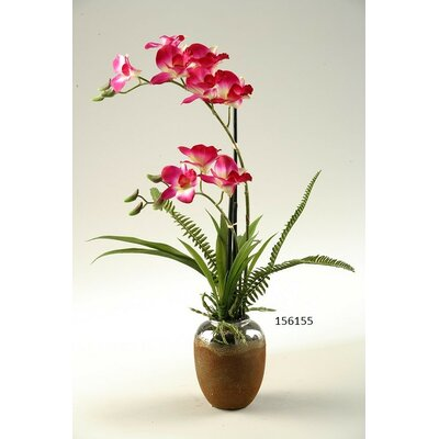 Pink/White Orchids in Ceramic Planter