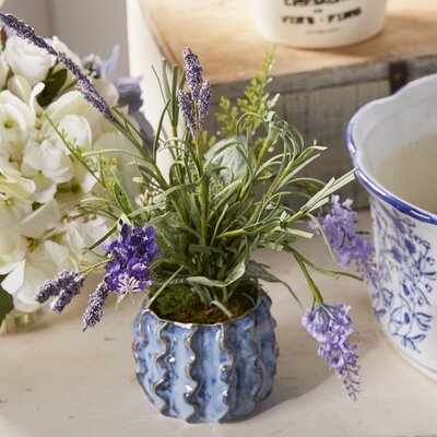 Lavender in Small Ceramic Planter