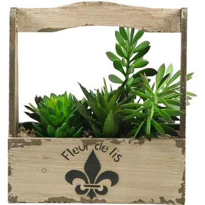 Mixed Succulents Rectangle Fleur De Lis Floral Arrangements in Planter with Handle