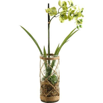 Vanda Orchid with Seagrass Netting Floral Arrangements in Glass Vase