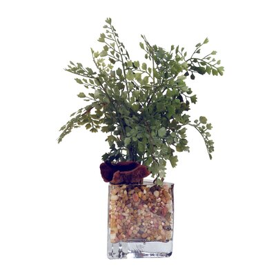 Maiden Hair Fern in Glass Vase