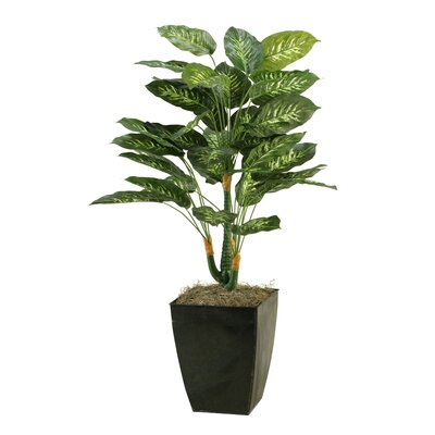 Dieffenbachia Plant in Planter