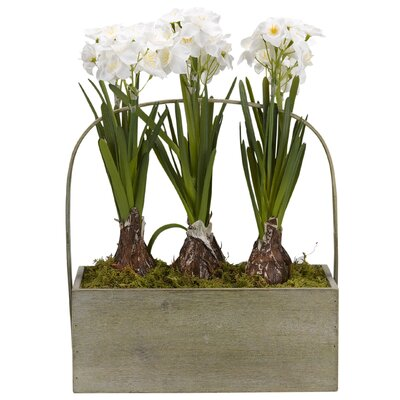 Paperwhite Bulbs Rectangle Wooden Foliage Plant in Planter RDBT4011 41990112