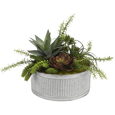 Echeveria, Aloe and Assorted Succulents in Tin Scculent Plant in Planter