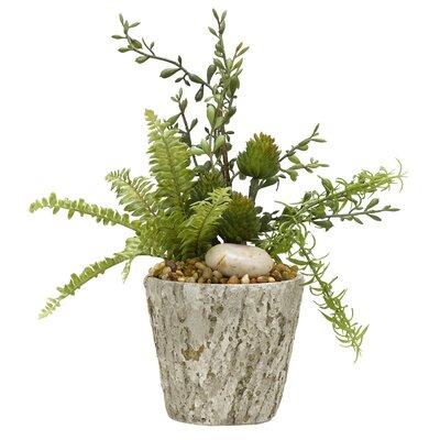 Mini Boston Fern, Spiny Protea and Springeri in Cement Plant in Planter