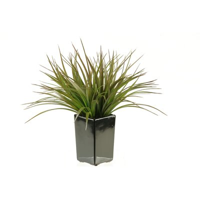 Square Ceramic Grass in Planter