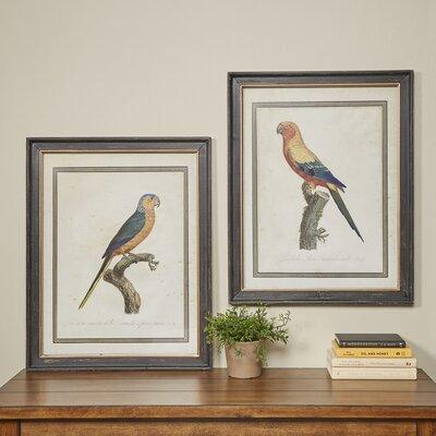 Vintage Parrot Framed Prints