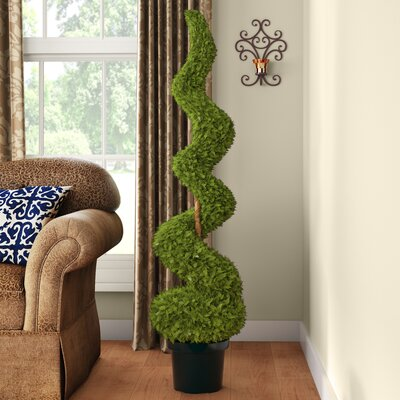 Cedar Spiral Tree with Ball in Green Pot Size: 48