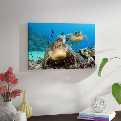 'Two Green Sea Turtle' Photographic Print on Canvas Size: 16'' H x 24'' W x 1.5'' D