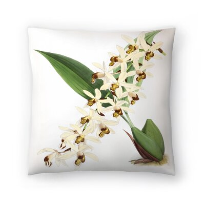 Fitch Orchid Caelogyne Massangena Throw Pillow Size: 14 x 14