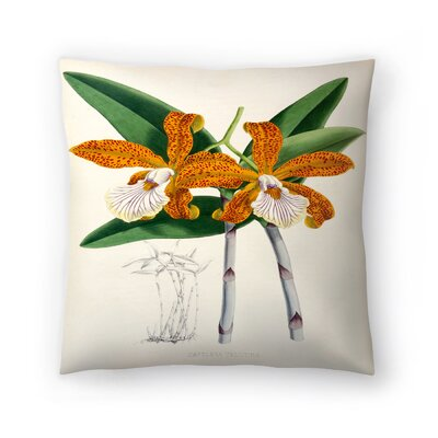 Fitch Orchid Cattleya Velutina Throw Pillow Size: 14 x 14
