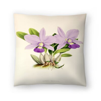 Fitch Orchid Cattleya Walkeriana Throw Pillow Size: 18 x 18
