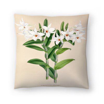 Fitch Orchid Dendrobium Draconis Throw Pillow Size: 20 x 20