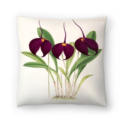 Fitch Orchid Masdevallia Harryana Atrosanguinea Throw Pillow Size: 16 x 16