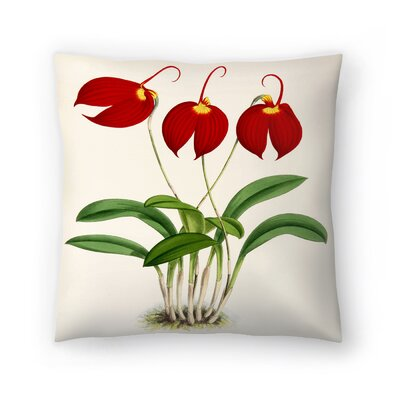 Fitch Orchid Masdevalliaignea Throw Pillow Size: 14 x 14