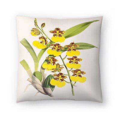 Fitch Orchid Odontoglossum Londesboroughianum Throw Pillow Size: 16 x 16
