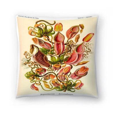 Haeckel Plate 62 Throw Pillow Size: 14 x 14