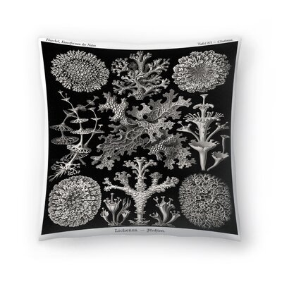 Haeckel Plate 83 Throw Pillow Size: 14 x 14
