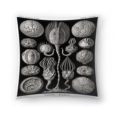 Haeckel Plate 90 Throw Pillow Size: 20 x 20