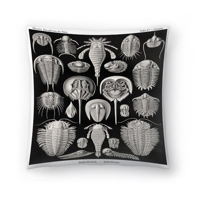 Haeckel Plate 47 Throw Pillow Size: 18 x 18