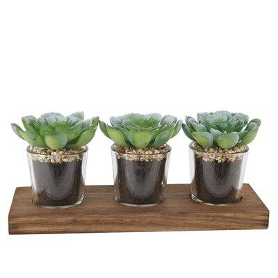 Desktop Succulent Plant in Pot Set