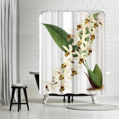 New York Botanical Garden Fitch Orchid Caelogyne Massangena Shower Curtain