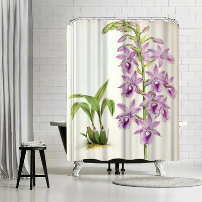 New York Botanical Garden Fitch Orchid Calanthe Veitchii Shower Curtain