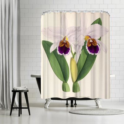 New York Botanical Garden Fitch Orchid Cattleya Labiata Percivaliana Shower Curtain