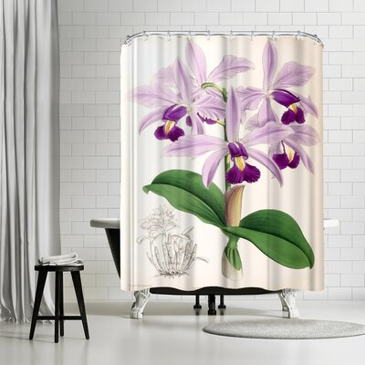 New York Botanical Garden Fitch Orchid Cattleya Superba Splendens Shower Curtain