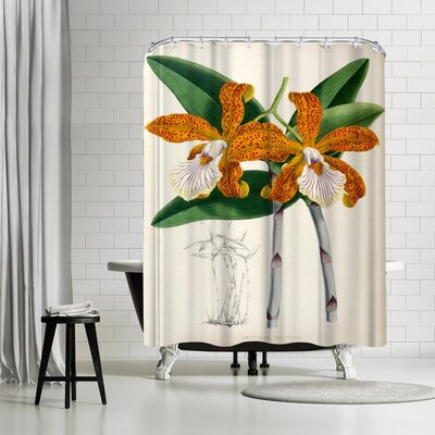 New York Botanical Garden Fitch Orchid Cattleya Velutina Shower Curtain Color: Olive Green