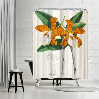 New York Botanical Garden Fitch Orchid Cattleya Velutina Shower Curtain Color: Dark Green